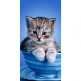 Strandtuch Katze 76x152 cm