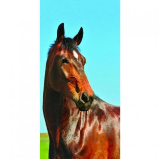 Strandtuch Pferd 80x160 cm