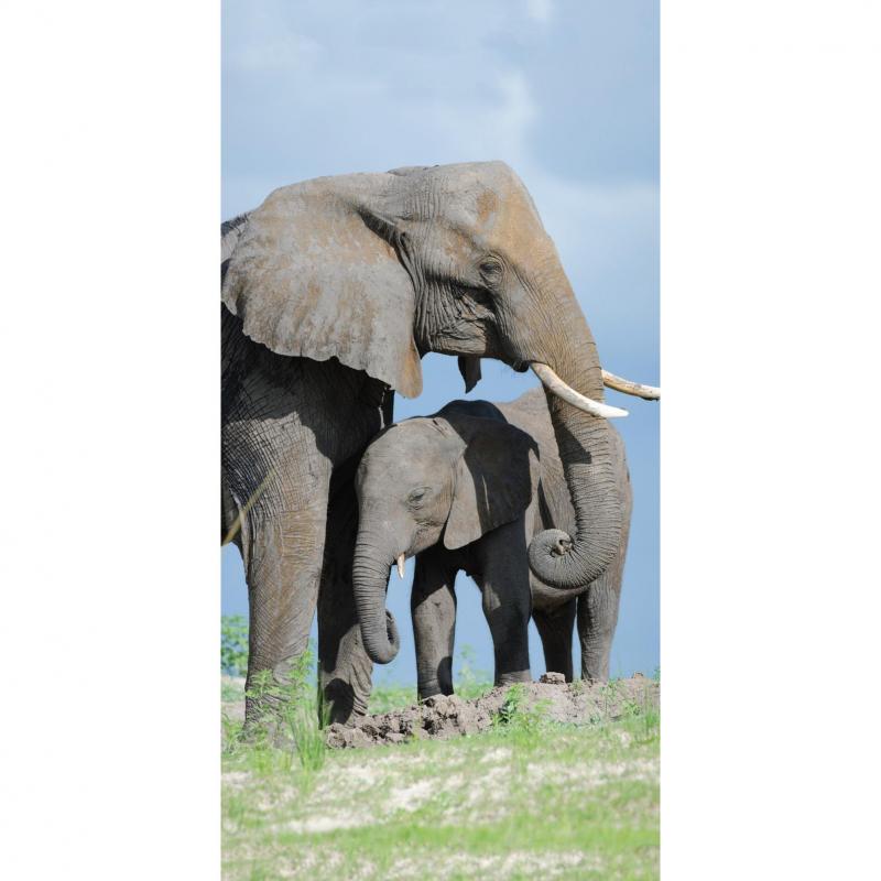 strandtuch mit elefant motiv 77x155 cm top preis chf 39 90. Black Bedroom Furniture Sets. Home Design Ideas