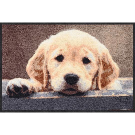 Fussmatte Nosy Dog 50x75 cm