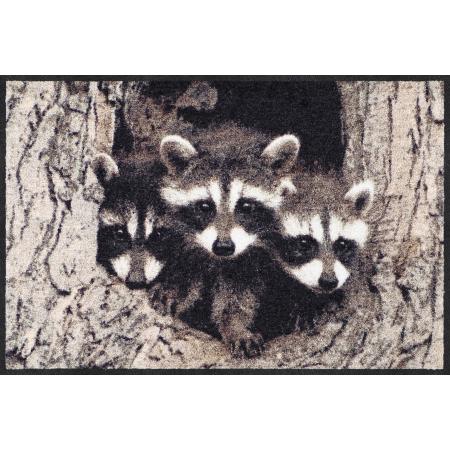 Fussmatte Little Racoons 50x75 cm